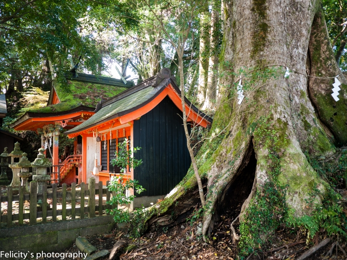 A view of Takahara shrine from the side, as its dwarfed by a massive, ancient camphor tree.