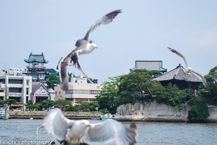 An attempted shot through seagulls of the Godaido hall and Aoba castle from the deck of our ferry.