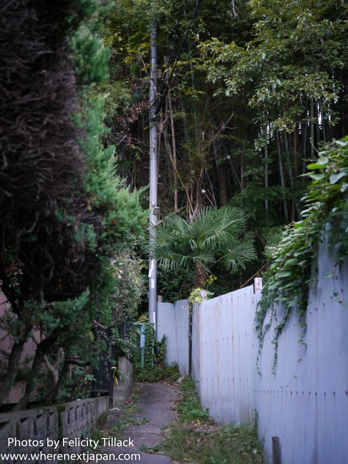 The jungle surrounding a full-on estate that bisects the road and forces pedestrians to cross train tracks to get past.
