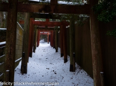 The torii gates up to my favourite shrine.