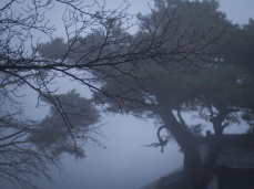A foggy morning in Koya.