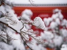 Many of Koyasan's trademark views are made even more beautiful against the pure white of fresh snow.