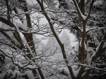 winter-1-of-1-4