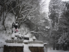 winter-1-of-1-8